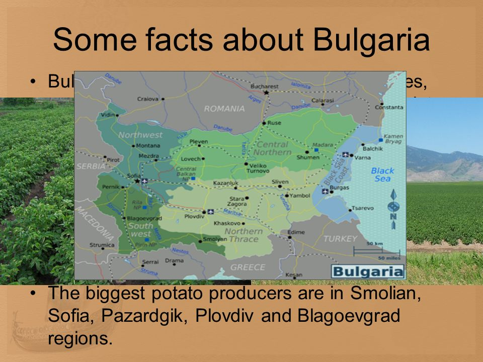 Some facts about Bulgaria Bulgaria is a major supplier of grapes, apples, and tomatoes to Europe and the former Soviet Union. Potatoes and paprika are