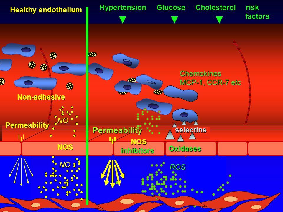 Permeability NONOS NO NO Non-adhesive Healthy endothelium Permeability Oxidases ROS ROS NOS NOSinhibitors Chemokines MCP-1, CCR-7 etc selectins Hypertension Glucose Cholesterol risk factors factors
