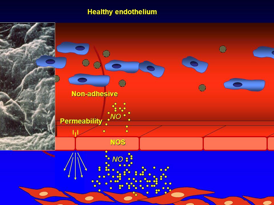 Permeability NONOS NO NO Non-adhesive Healthy endothelium