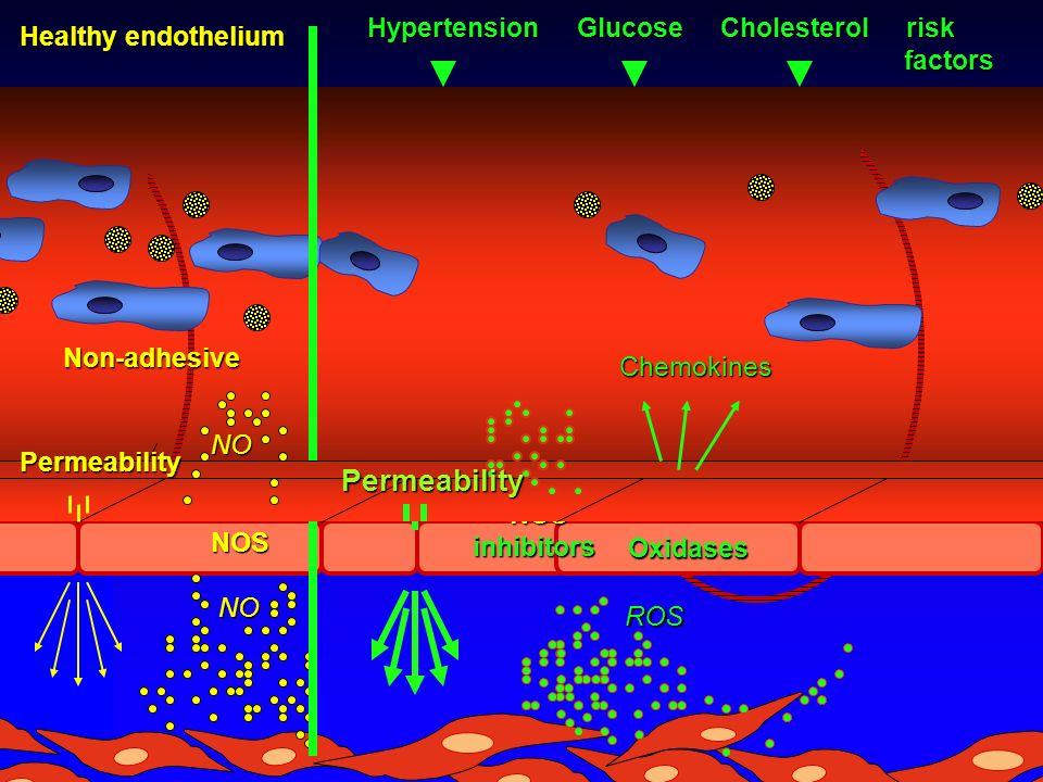 NONOS NO NO Non-adhesive Healthy endothelium Hypertension Glucose Cholesterol risk factors factors ROS ROS Oxidases NOS NOSinhibitors Chemokines Permeability Permeability