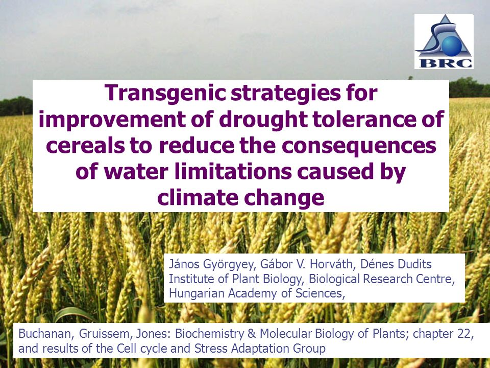 Transgenic strategies for improvement of drought tolerance of cereals to reduce the consequences of water limitations caused by climate change János Györgyey, Gábor V.