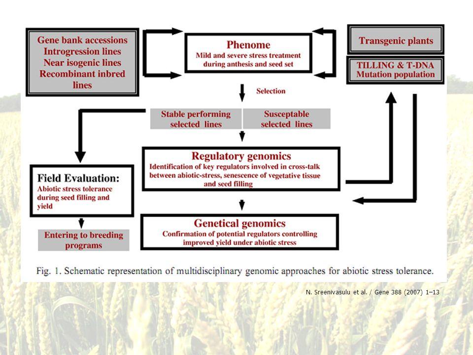 N. Sreenivasulu et al. / Gene 388 (2007) 1–13