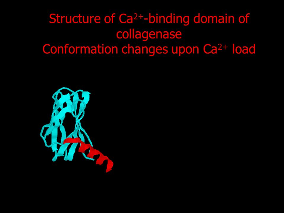Structure of Ca 2+ -binding domain of collagenase Conformation changes upon Ca 2+ load
