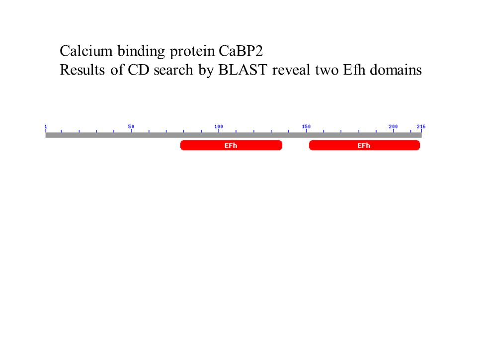Calcium binding protein CaBP2 Results of CD search by BLAST reveal two Efh domains