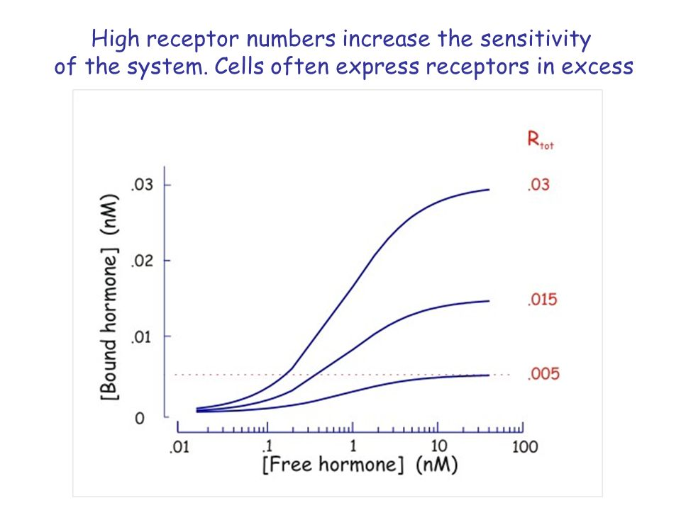 High receptor numbers increase the sensitivity of the system.