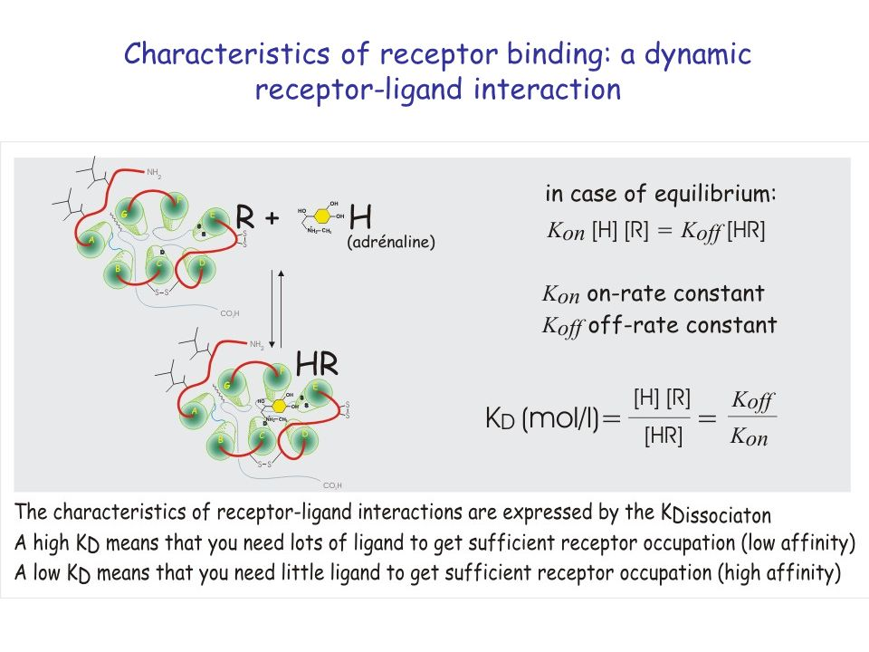 Characteristics of receptor binding: a dynamic receptor-ligand interaction