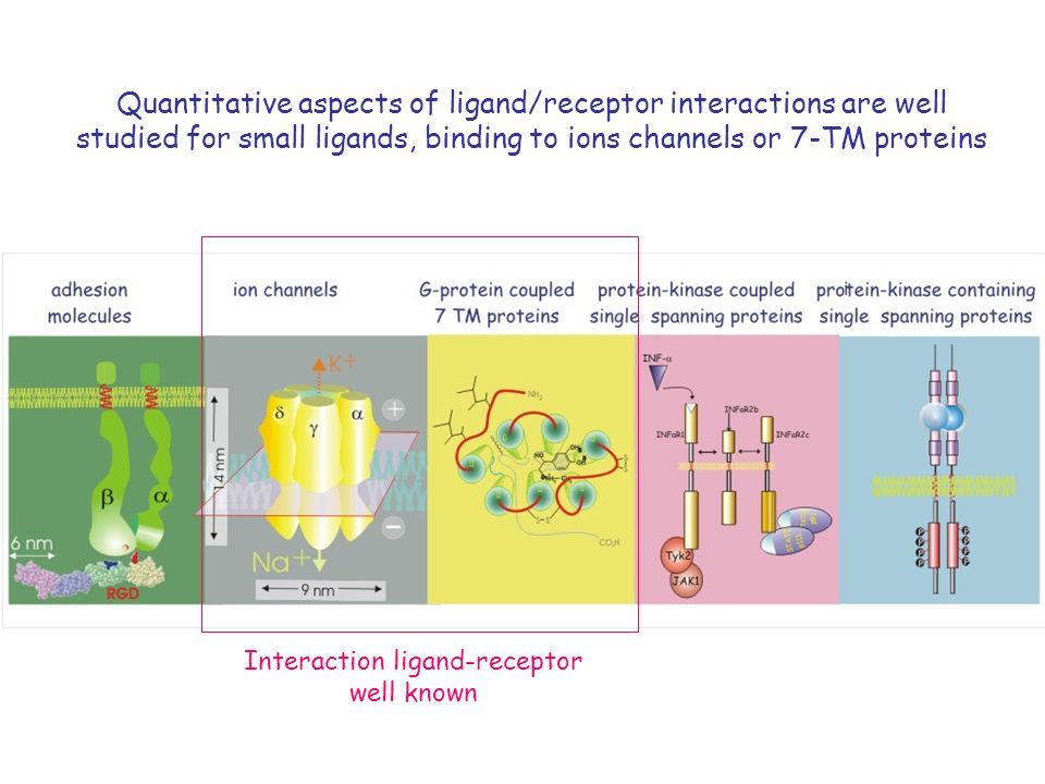 Quantitative aspects of ligand/receptor interactions are well studied for small ligands, binding to ions channels or 7-TM proteins Interaction ligand-receptor well known