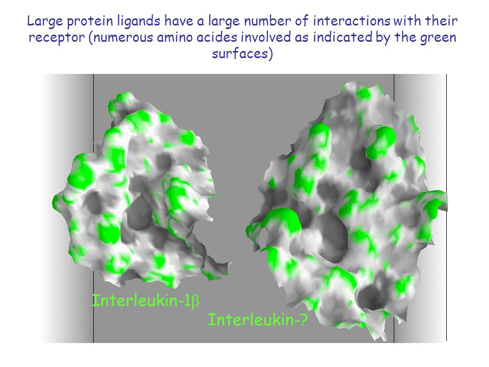 Large protein ligands have a large number of interactions with their receptor (numerous amino acides involved as indicated by the green surfaces) Interleukin-1 Interleukin-?