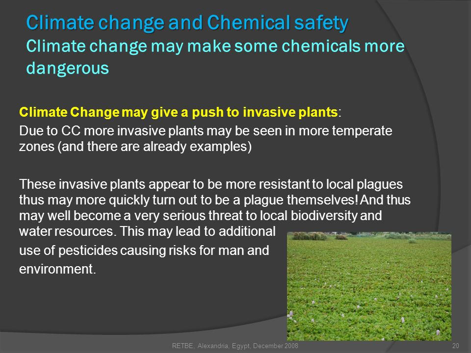 Climate Change may give a push to invasive plants: Due to CC more invasive plants may be seen in more temperate zones (and there are already examples)