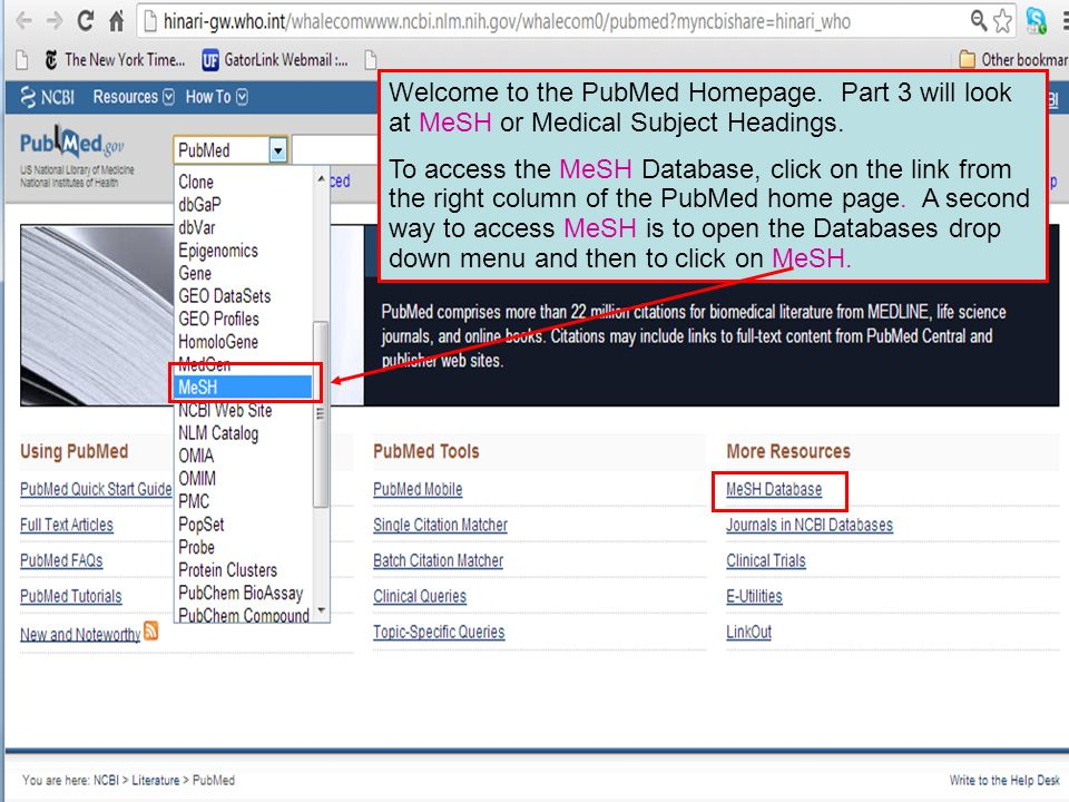 After clicking on Dengue, we will open the Display Settings drop down menu, click on the Full Format button and Apply.