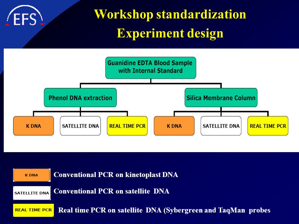 Workshop standardization Experiment design Conventional PCR on kinetoplast DNA Conventional PCR on satellite DNA Real time PCR on satellite DNA (Syber