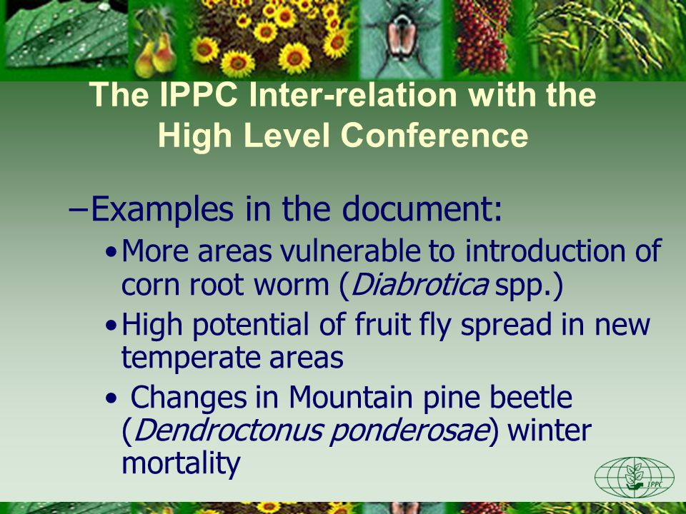 The IPPC Inter-relation with the High Level Conference –Examples in the document: More areas vulnerable to introduction of corn root worm (Diabrotica spp.) High potential of fruit fly spread in new temperate areas Changes in Mountain pine beetle (Dendroctonus ponderosae) winter mortality