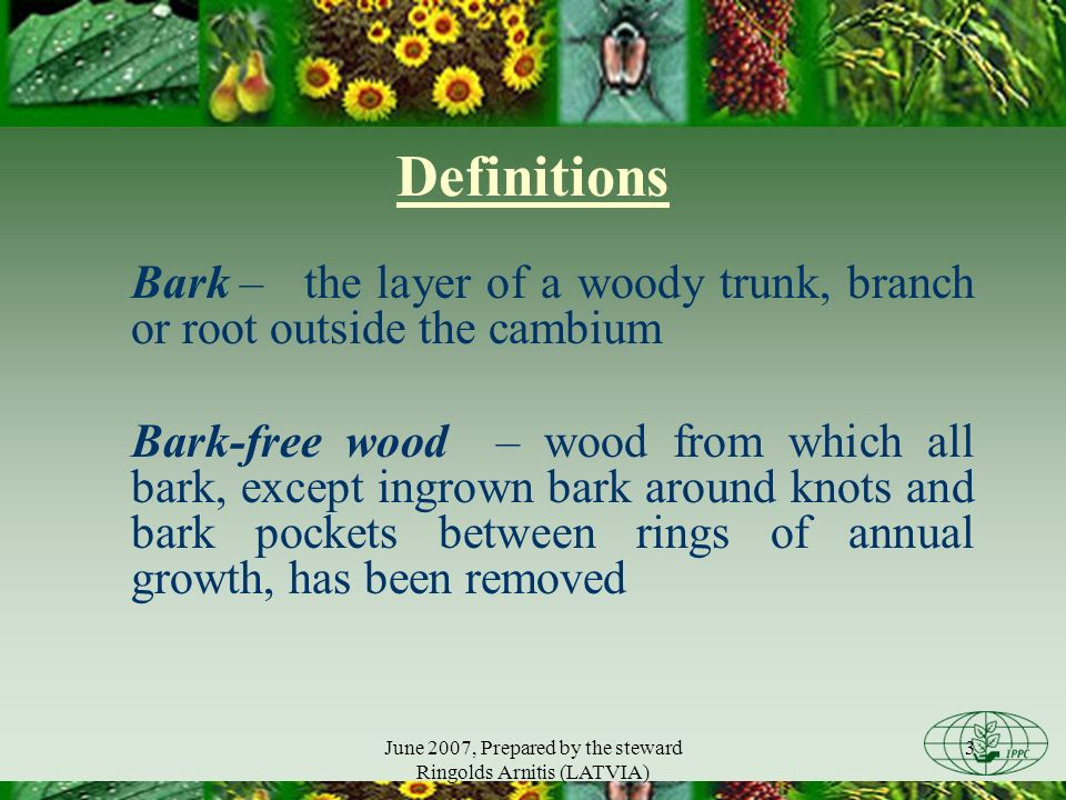 June 2007, Prepared by the steward Ringolds Arnitis (LATVIA) 3 Definitions Bark – the layer of a woody trunk, branch or root outside the cambium Bark-free wood – wood from which all bark, except ingrown bark around knots and bark pockets between rings of annual growth, has been removed