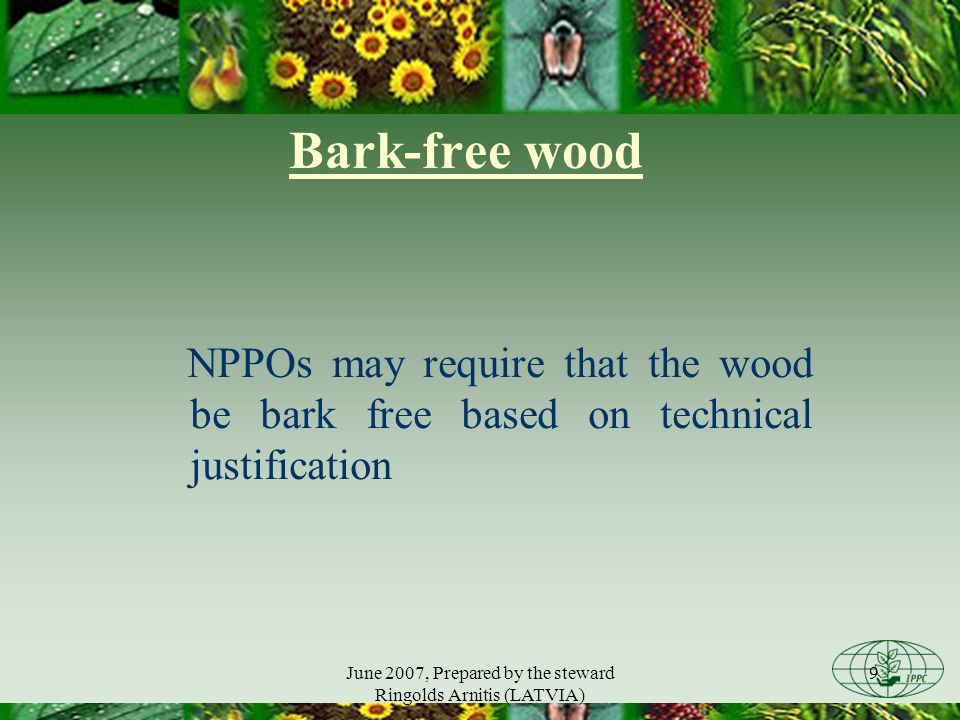 June 2007, Prepared by the steward Ringolds Arnitis (LATVIA) 9 Bark-free wood NPPOs may require that the wood be bark free based on technical justification