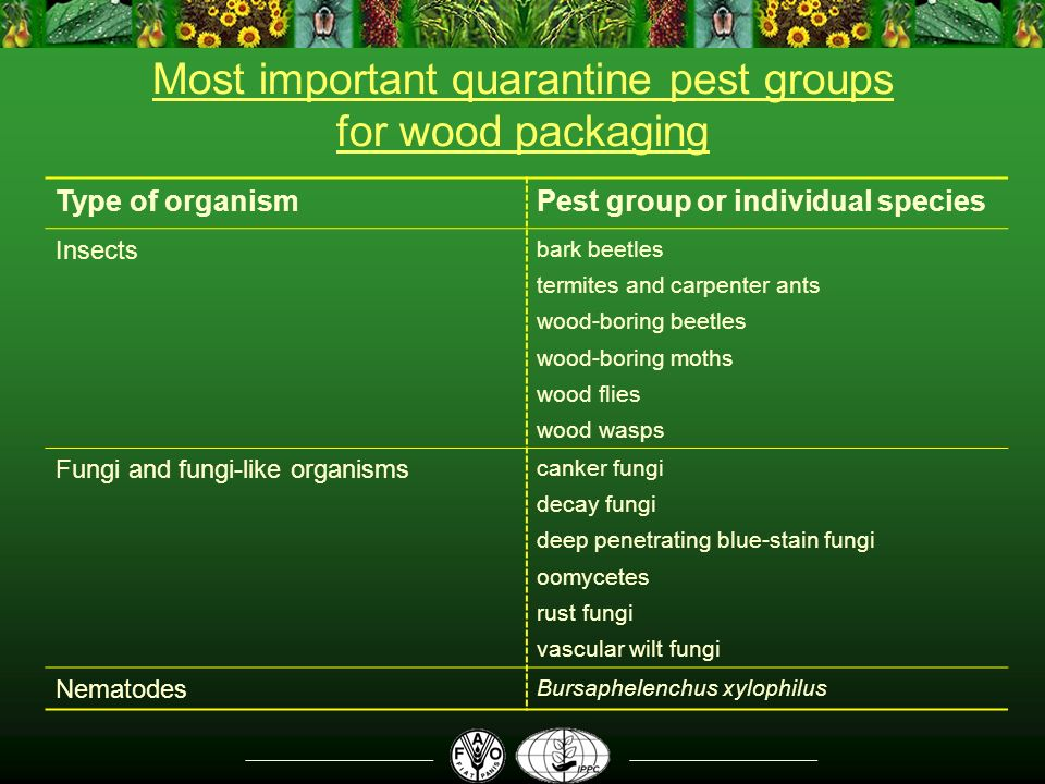 Most important quarantine pest groups for wood packaging Type of organismPest group or individual species Insects bark beetles termites and carpenter