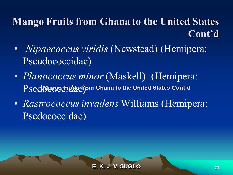E. K. J. V. SUGLO 20 Nipaecoccus viridis (Newstead) (Hemipera: Pseudococcidae) Planococcus minor (Maskell) (Hemipera: Psedococcidae) Rastrococcus inva