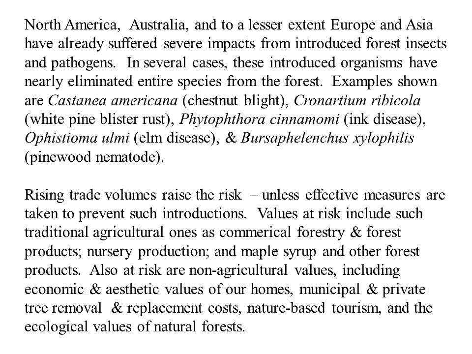 North America, Australia, and to a lesser extent Europe and Asia have already suffered severe impacts from introduced forest insects and pathogens.