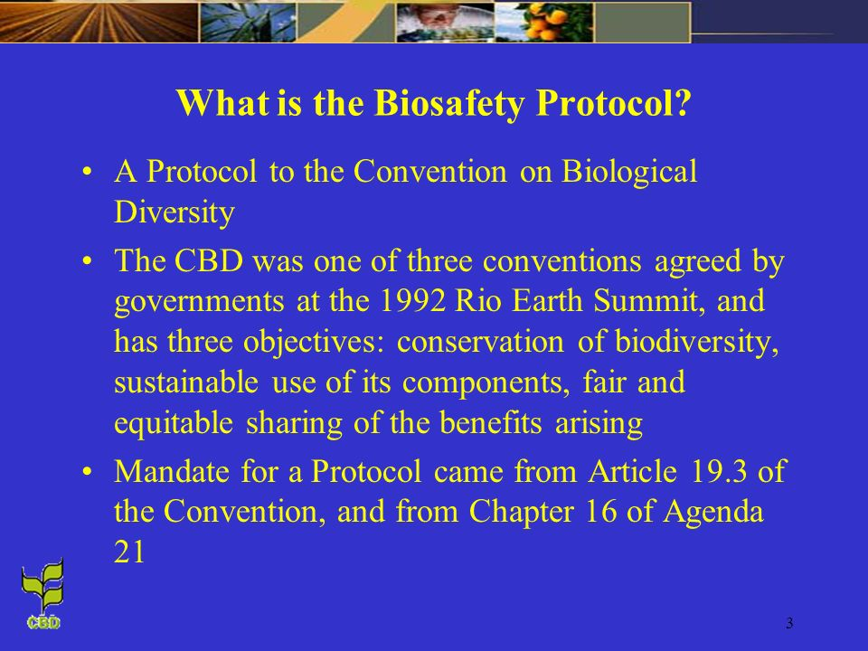 3 What is the Biosafety Protocol? A Protocol to the Convention on Biological Diversity The CBD was one of three conventions agreed by governments at t