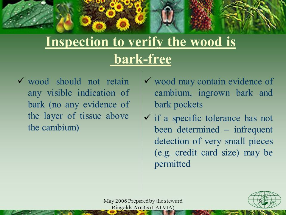May 2006 Prepared by the steward Ringolds Arnitis (LATVIA) 9 Inspection to verify the wood is bark-free wood should not retain any visible indication of bark (no any evidence of the layer of tissue above the cambium) wood may contain evidence of cambium, ingrown bark and bark pockets if a specific tolerance has not been determined – infrequent detection of very small pieces (e.g.