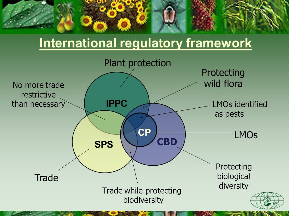 IPPC CBD SPS International regulatory framework CP Protecting wild flora Trade while protecting biodiversity Trade LMOs No more trade restrictive than
