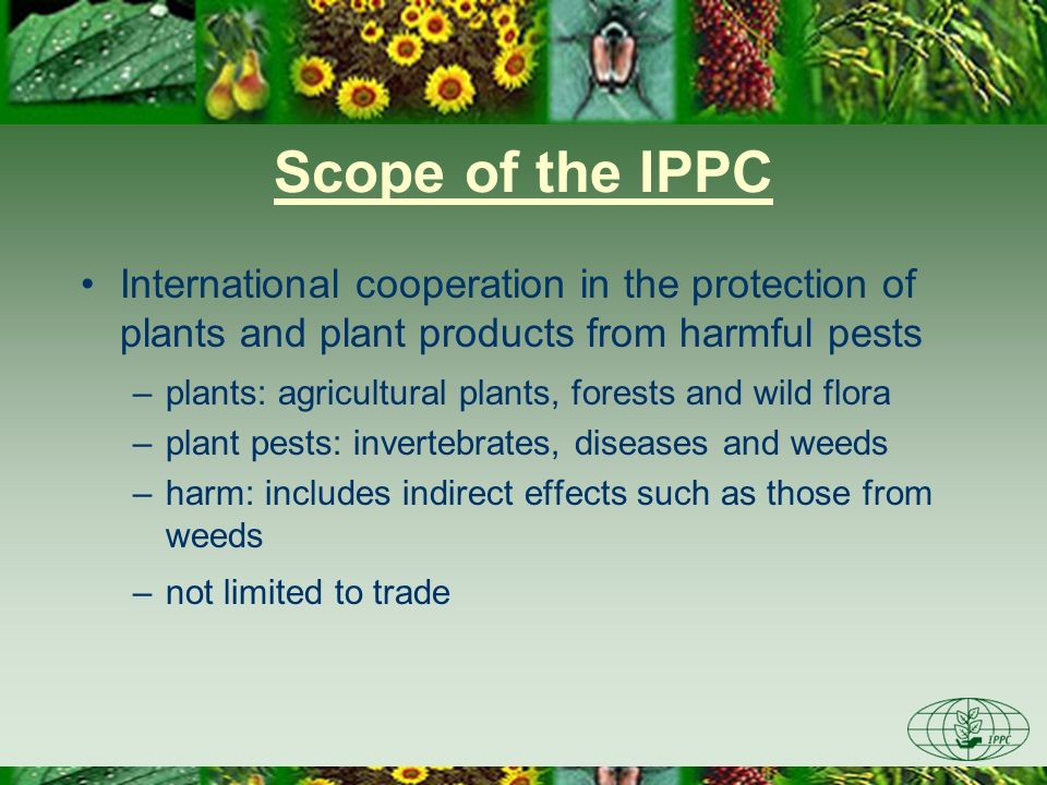 Scope of the IPPC International cooperation in the protection of plants and plant products from harmful pests –plants: agricultural plants, forests an