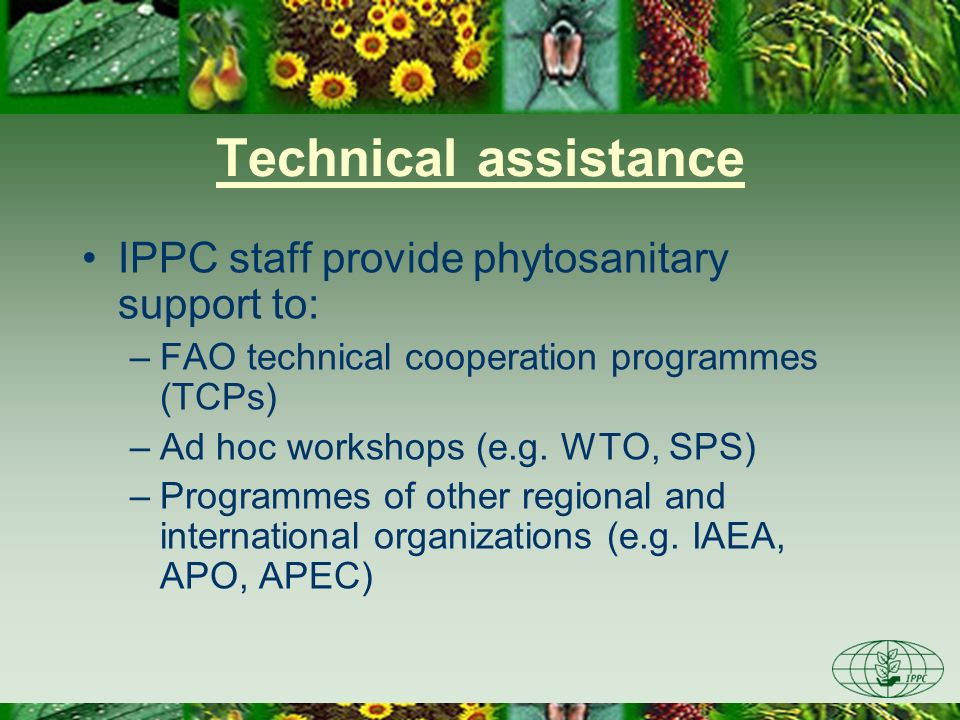 Technical assistance IPPC staff provide phytosanitary support to: –FAO technical cooperation programmes (TCPs) –Ad hoc workshops (e.g. WTO, SPS) –Prog