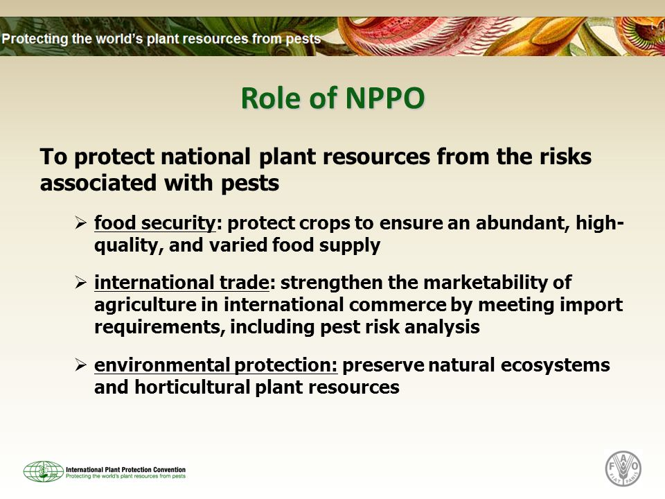 Role of NPPO To protect national plant resources from the risks associated with pests food security: protect crops to ensure an abundant, high- qualit