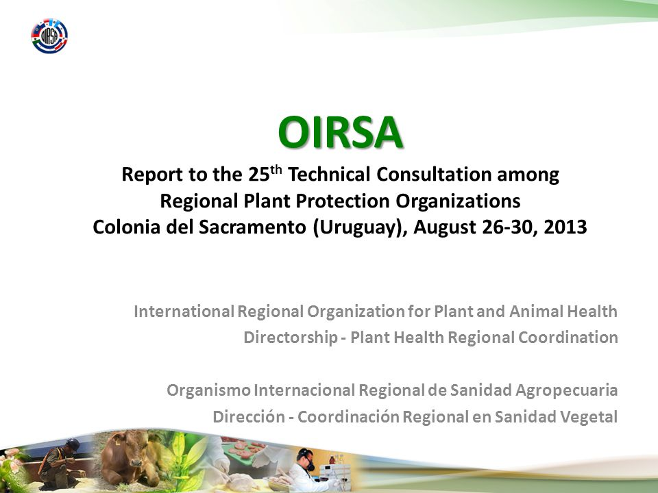 International Regional Organization for Plant and Animal Health Directorship - Plant Health Regional Coordination Organismo Internacional Regional de Sanidad Agropecuaria Dirección - Coordinación Regional en Sanidad Vegetal OIRSA Report to the 25 th Technical Consultation among Regional Plant Protection Organizations Colonia del Sacramento (Uruguay), August 26-30, 2013