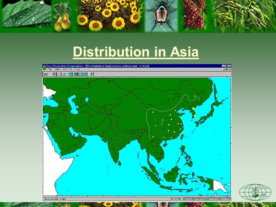 Distribution in Asia