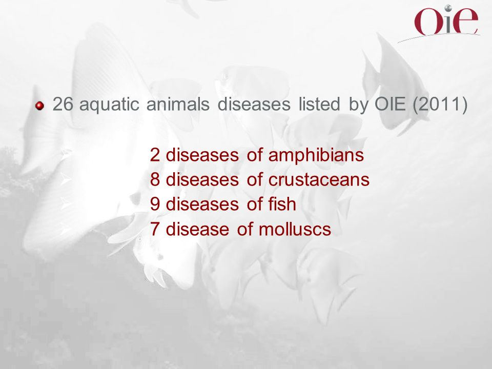 26 aquatic animals diseases listed by OIE (2011) 2 diseases of amphibians 8 diseases of crustaceans 9 diseases of fish 7 disease of molluscs