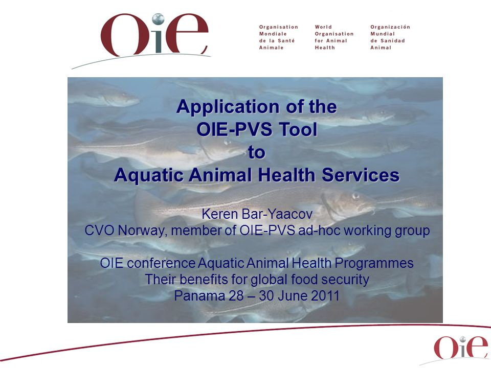 Application of the OIE-PVS Tool to Aquatic Animal Health Services Keren Bar-Yaacov CVO Norway, member of OIE-PVS ad-hoc working group OIE conference A