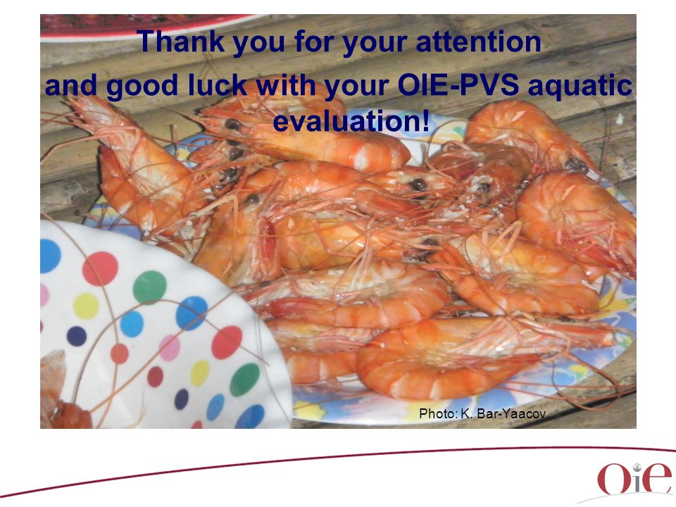 Thank you for your attention and good luck with your OIE-PVS aquatic evaluation! Photo: K. Bar-Yaacov