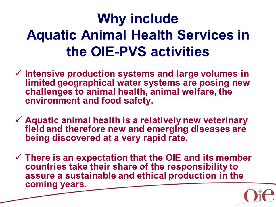 Why include Aquatic Animal Health Services in the OIE-PVS activities Intensive production systems and large volumes in limited geographical water systems are posing new challenges to animal health, animal welfare, the environment and food safety.