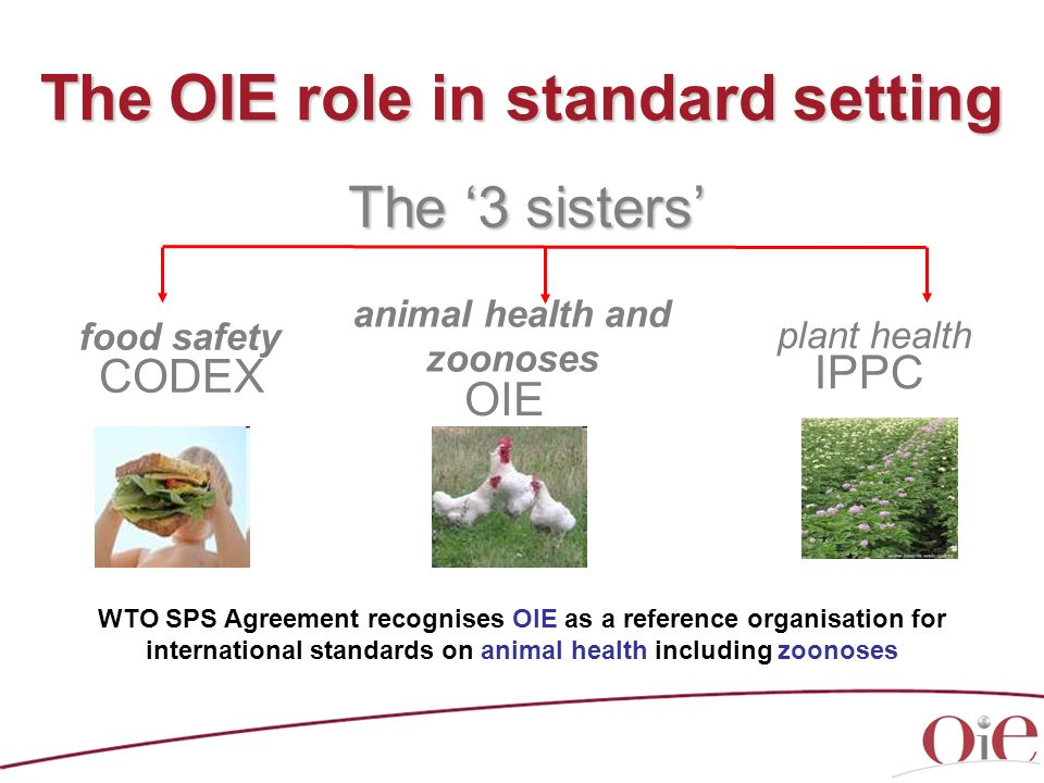 The OIE role in standard setting The 3 sisters food safety CODEX plant health IPPC animal health and zoonoses OIE WTO SPS Agreement recognises OIE as