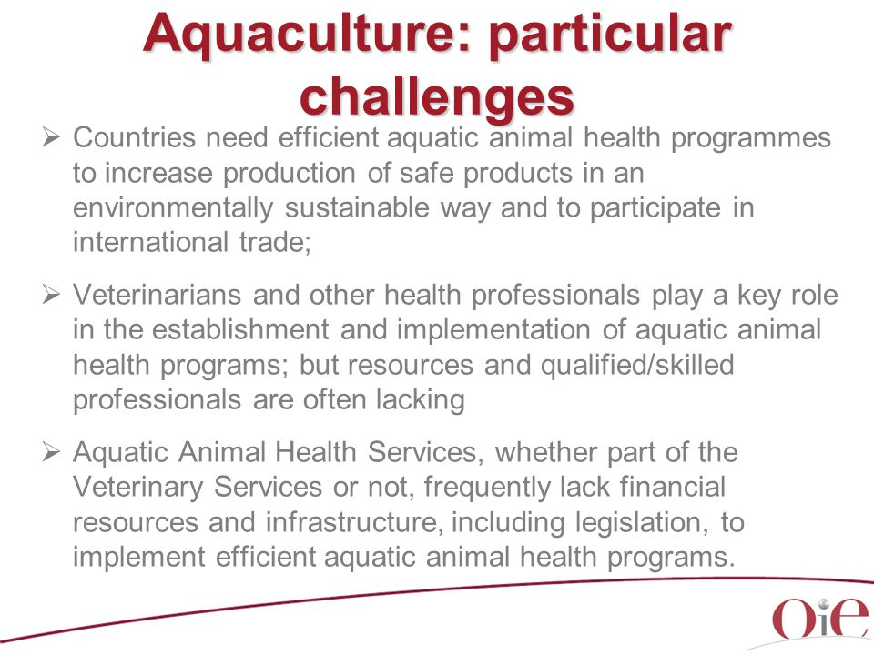 Aquaculture: particular challenges Countries need efficient aquatic animal health programmes to increase production of safe products in an environment