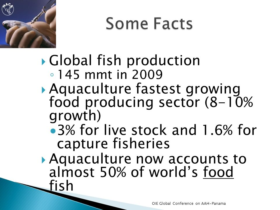 Global fish production 145 mmt in 2009 Aquaculture fastest growing food producing sector (8-10% growth) 3% for live stock and 1.6% for capture fisheri