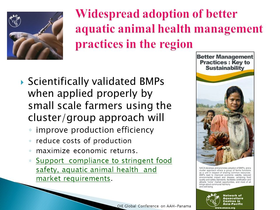 Scientifically validated BMPs when applied properly by small scale farmers using the cluster/group approach will improve production efficiency reduce