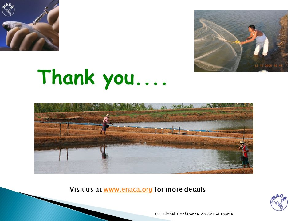 Thank you.... Visit us at www.enaca.org for more detailswww.enaca.org OIE Global Conference on AAH-Panama