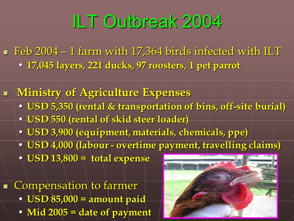 ILT Outbreak 2004 Feb 2004 – 1 farm with 17,364 birds infected with ILT Feb 2004 – 1 farm with 17,364 birds infected with ILT 17,045 layers, 221 ducks, 97 roosters, 1 pet parrot 17,045 layers, 221 ducks, 97 roosters, 1 pet parrot Ministry of Agriculture Expenses Ministry of Agriculture Expenses USD 5,350 (rental & transportation of bins, off-site burial) USD 5,350 (rental & transportation of bins, off-site burial) USD 550 (rental of skid steer loader) USD 550 (rental of skid steer loader) USD 3,900 (equipment, materials, chemicals, ppe) USD 3,900 (equipment, materials, chemicals, ppe) USD 4,000 (labour - overtime payment, travelling claims) USD 4,000 (labour - overtime payment, travelling claims) USD 13,800 = total expense USD 13,800 = total expense Compensation to farmer Compensation to farmer USD 85,000 = amount paid USD 85,000 = amount paid Mid 2005 = date of payment Mid 2005 = date of payment