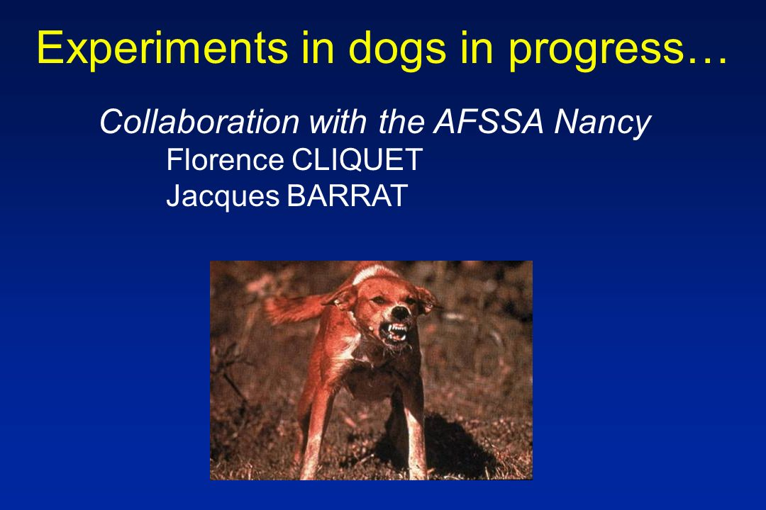 Experiments in dogs in progress… Collaboration with the AFSSA Nancy Florence CLIQUET Jacques BARRAT