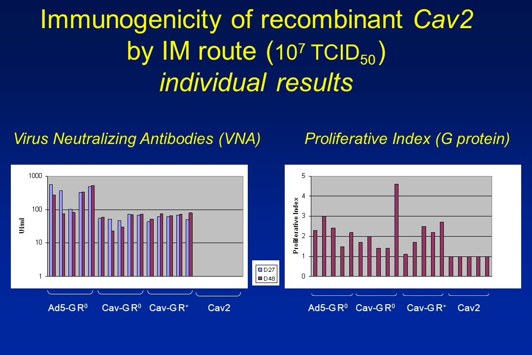 Ad5-G R 0 Virus Neutralizing Antibodies (VNA)Proliferative Index (G protein) Cav-G R 0 Cav-G R + Cav2Ad5-G R 0 Cav-G R 0 Cav-G R + Cav2 Immunogenicity of recombinant Cav2 by IM route ( 10 7 TCID 50 ) individual results