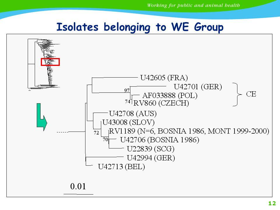 12 Isolates belonging to WE Group