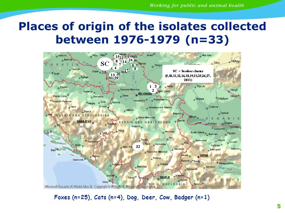 5 Places of origin of the isolates collected between 1976-1979 (n=33) Foxes (n=25), Cats (n=4), Dog, Deer, Cow, Badger (n=1)