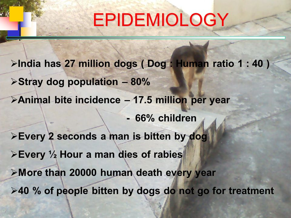 EPIDEMIOLOGY India has 27 million dogs ( Dog : Human ratio 1 : 40 ) Stray dog population – 80% Animal bite incidence – 17.5 million per year - 66% children Every 2 seconds a man is bitten by dog Every ½ Hour a man dies of rabies More than 20000 human death every year 40 % of people bitten by dogs do not go for treatment