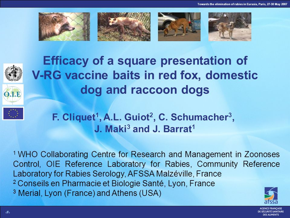 Towards the elimination of rabies in Eurasia, Paris, 27-30 May 2007 1 Efficacy of a square presentation of V-RG vaccine baits in red fox, domestic dog and raccoon dogs F.