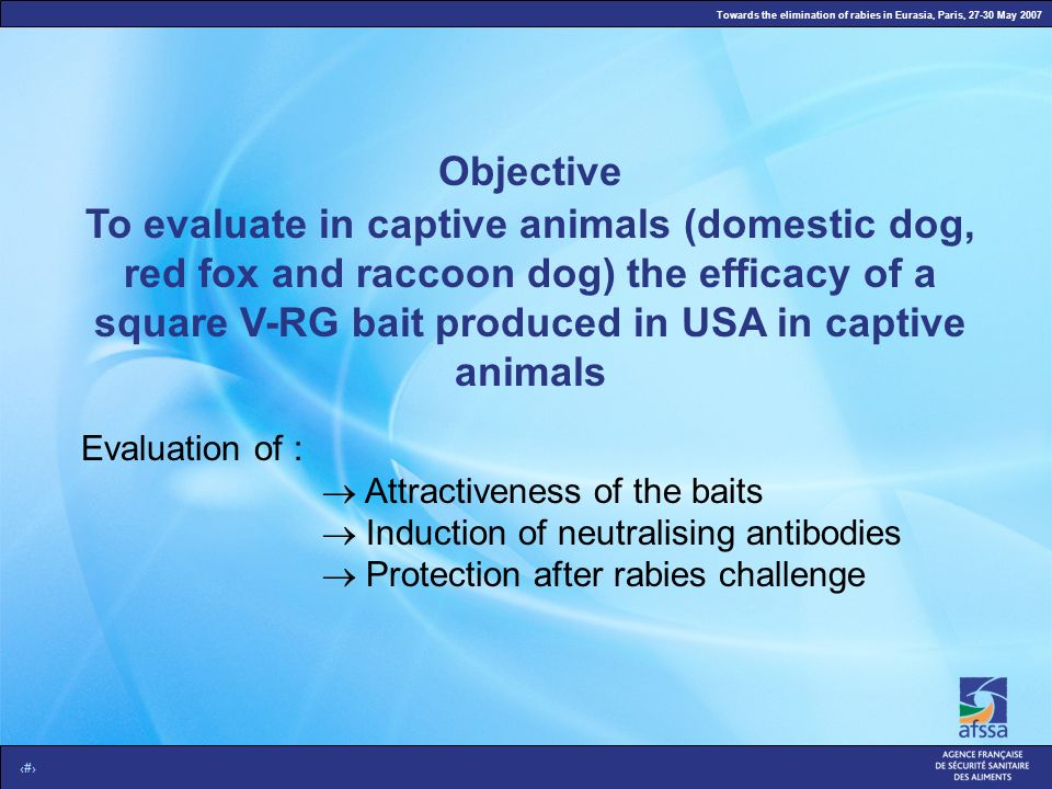 Towards the elimination of rabies in Eurasia, Paris, 27-30 May 2007 3 To evaluate in captive animals (domestic dog, red fox and raccoon dog) the efficacy of a square V-RG bait produced in USA in captive animals Evaluation of : Attractiveness of the baits Induction of neutralising antibodies Protection after rabies challenge Objective