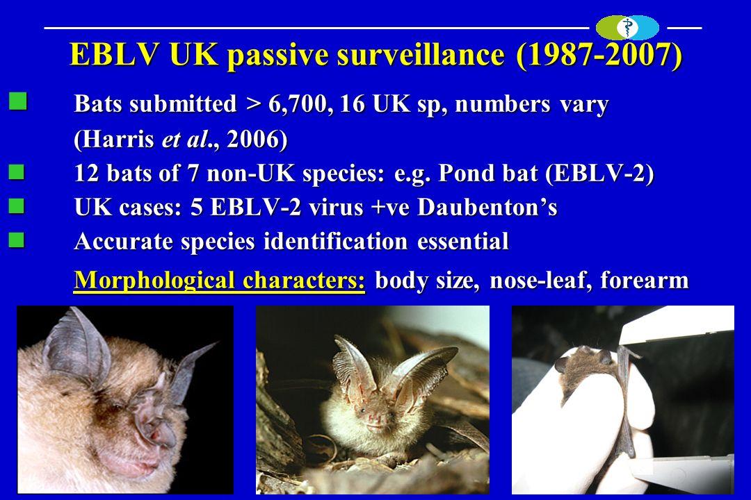 EBLV UK passive surveillance (1987-2007) Bats submitted > 6,700, 16 UK sp, numbers vary Bats submitted > 6,700, 16 UK sp, numbers vary (Harris et al.,
