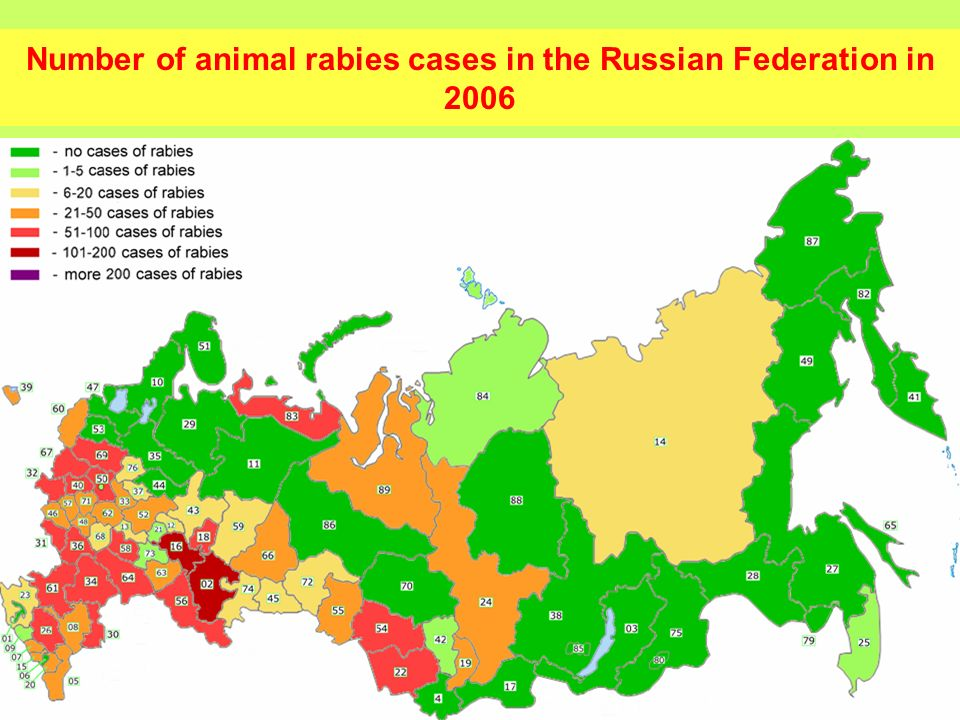 6 In the frames of the program the following work was done: Rabies monitoring in Russian regions bordering Finland; Arrangement of anti-rabies buffer zone on the Finnish- Russian border using oral vaccines; Safety and immunogenisity testing of oral anti-rabies vaccines; Collection and antigenic and genetic characterization of the field rabies viruses; Entire genome sequencing and genetic characterisation of vaccine strain RV-97; Differentiation of vaccine and field strains with restriction and Real-Time PCR