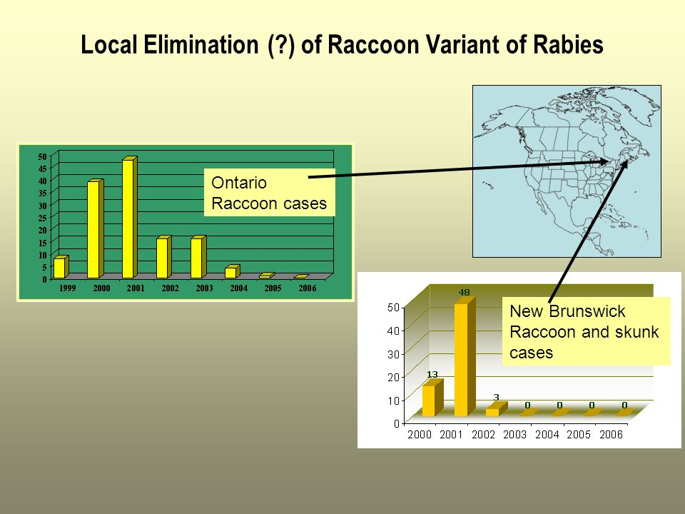 Local Elimination (?) of Raccoon Variant of Rabies Ontario Raccoon cases New Brunswick Raccoon and skunk cases