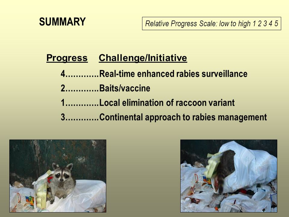 SUMMARY Real-time enhanced rabies surveillance Baits/vaccine Local elimination of raccoon variant Continental approach to rabies management Relative P